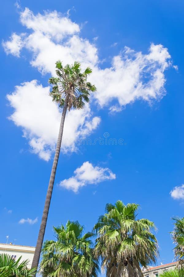 Download Stedelijke Palmen Onder Wolken Stock Foto - Afbeelding bestaande uit gras, lush: 54084514
