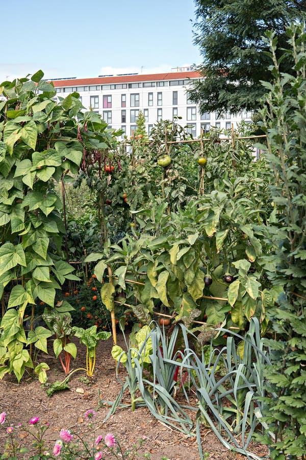 Stedelijke tuin met gebouwen bij achtergrond royalty-vrije stock afbeelding