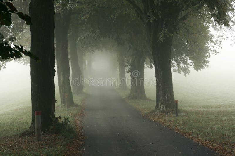 Steeg in de mist stock fotografie