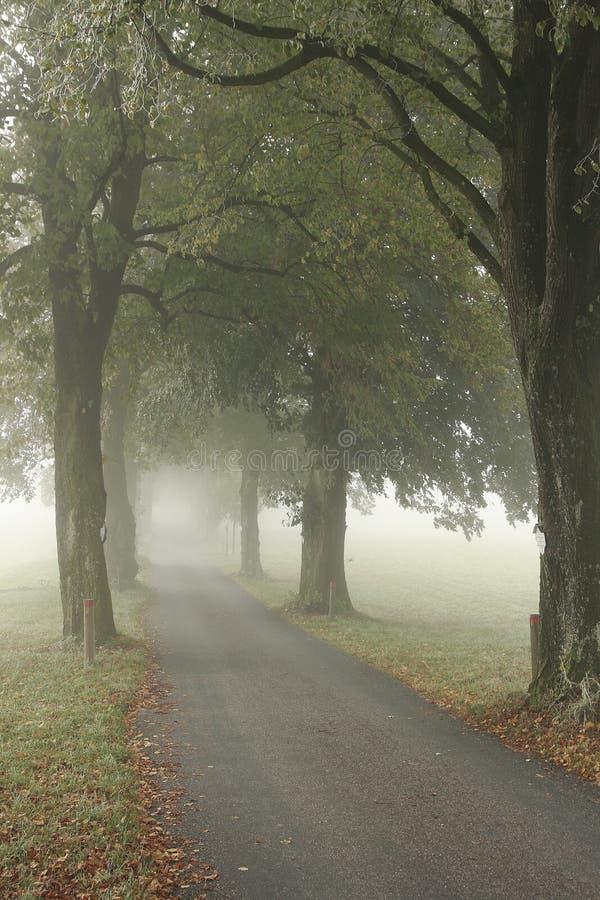 Steeg in de mist stock afbeelding