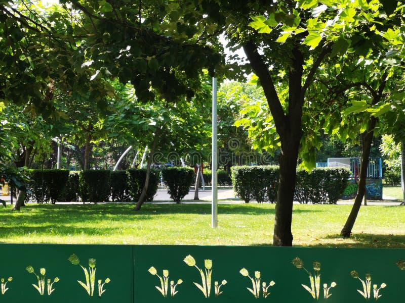Steeg in het park - de groene tulpen van de omheiningsbesnoeiing royalty-vrije stock foto