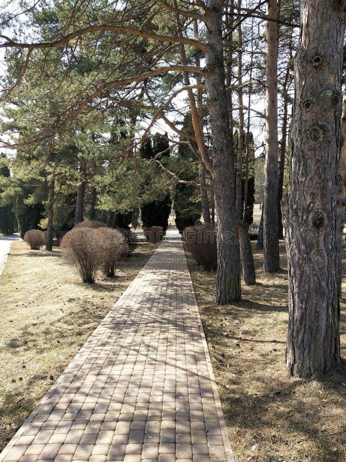 Steeg in het park in de lente royalty-vrije stock fotografie