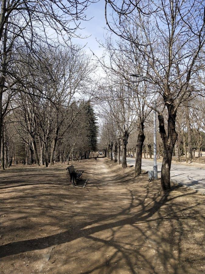 Steeg in het park in de lente stock foto's