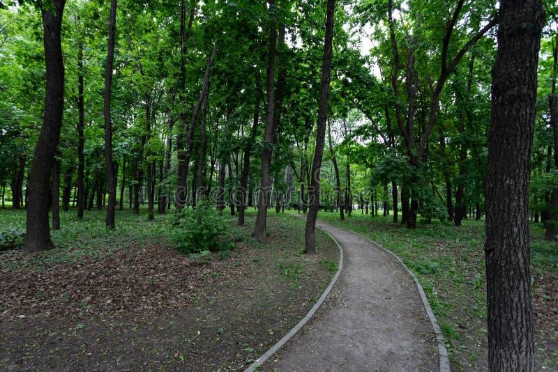 Steeg in het Park onder boomboomstammen op een de zomer of de lentedag stock afbeelding