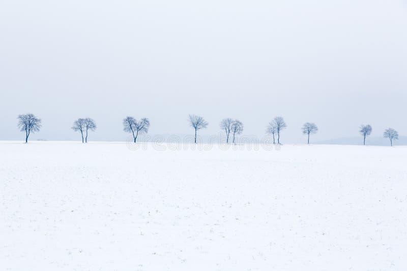 Steeg van bomen in sneeuw behandeld landschap stock foto's