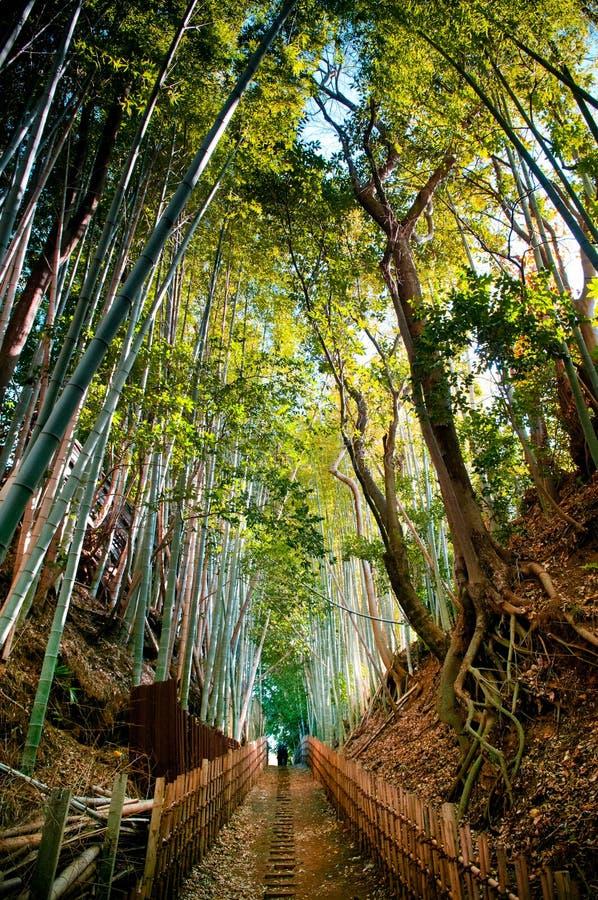 Steeg van het bamboe de bos en kleine vuil, Sakura-stad, Chiba, Japan royalty-vrije stock foto's