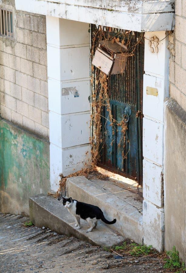 steegkat in sloppenwijk stock foto
