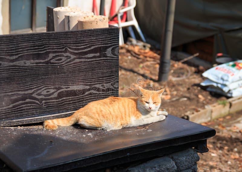 steegkat in sloppenwijk stock afbeelding