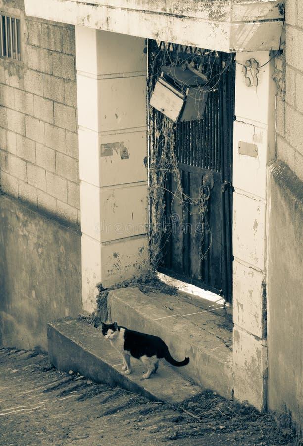 steegkat in sloppenwijk & x28; brown& x29; stock foto