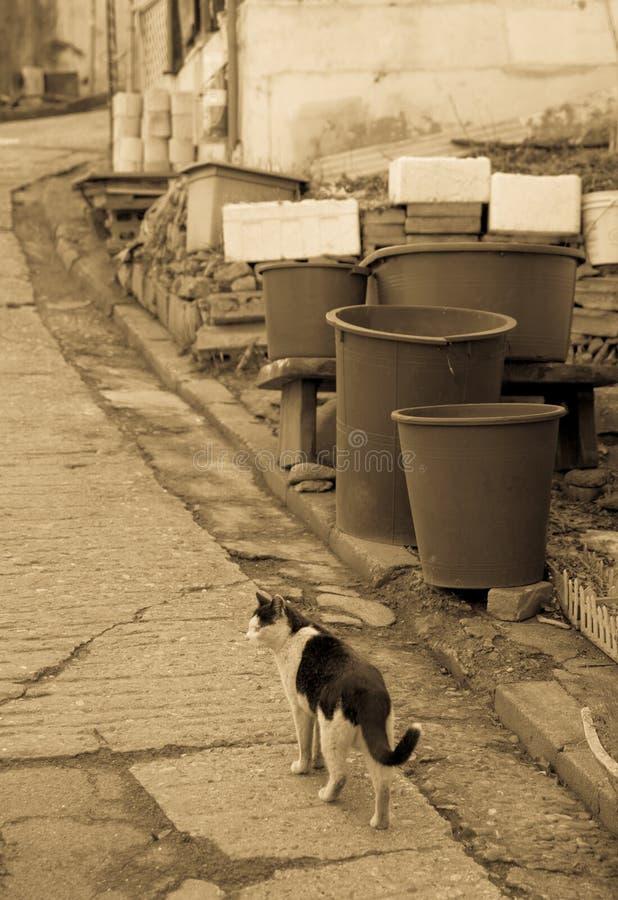 steegkat in sloppenwijk & x28; brown& x29; stock fotografie