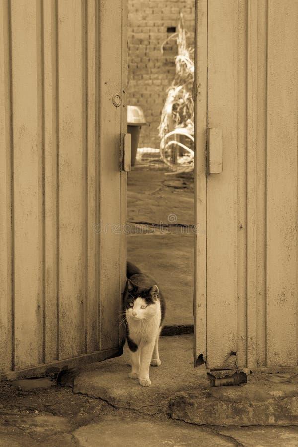 steegkat in sloppenwijk & x28; brown& x29; stock afbeelding