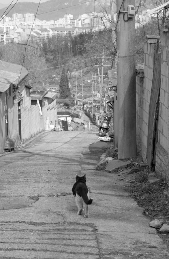 steegkat in sloppenwijk & x28; zwart-wit & x29; stock afbeeldingen