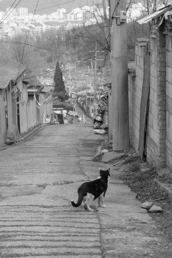 steegkat in sloppenwijk & x28; zwart-wit & x29; stock foto's