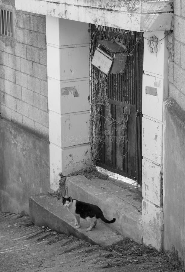 steegkat in sloppenwijk & x28; zwart-wit & x29; royalty-vrije stock foto's