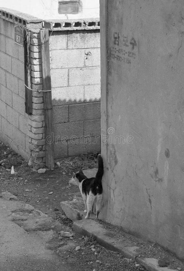 steegkat in sloppenwijk & x28; zwart-wit & x29; stock afbeelding
