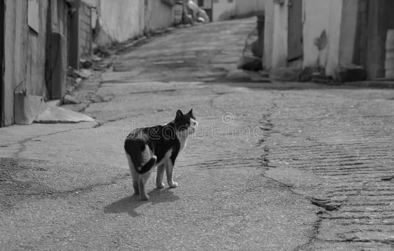 steegkat in sloppenwijk & x28; zwart-wit & x29; royalty-vrije stock fotografie