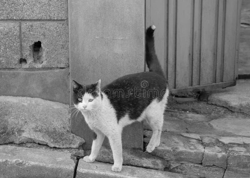 steegkat in sloppenwijk & x28; zwart-wit & x29; stock foto