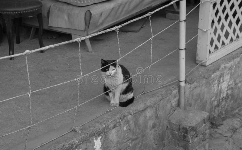 steegkat in sloppenwijk & x28; zwart-wit & x29; royalty-vrije stock afbeelding