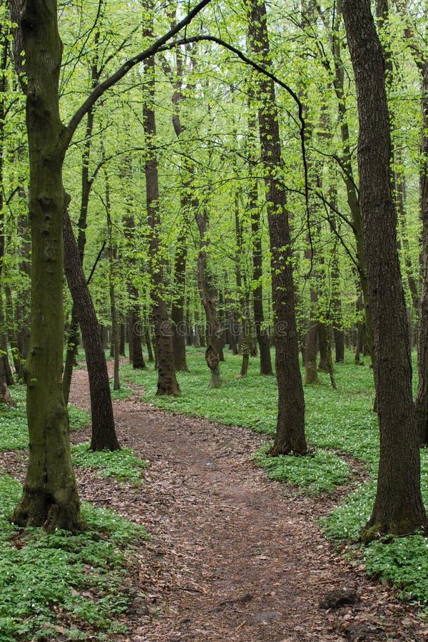 Steegweg in groen de lentebos stock foto