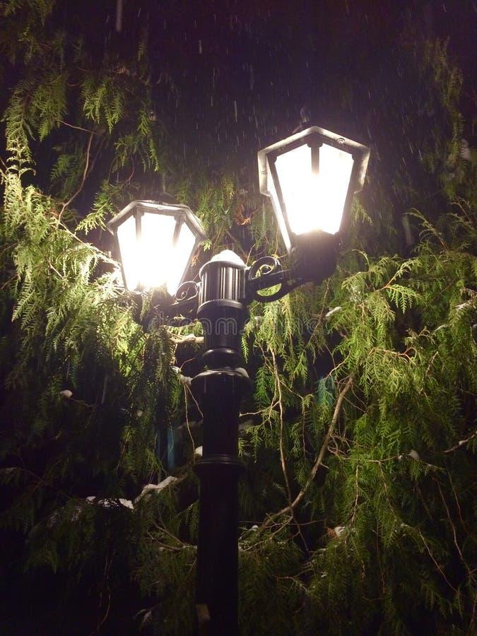 Steekt dichtbij een groene boom in de sneeuw aan stock foto