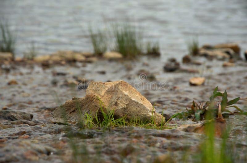 Steen in het midden van de kreek, met gras wordt overwoekerd dat stock foto's