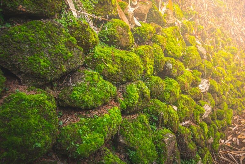Steen met mos in bos bij noordelijk van Thailand met zonlicht royalty-vrije stock fotografie