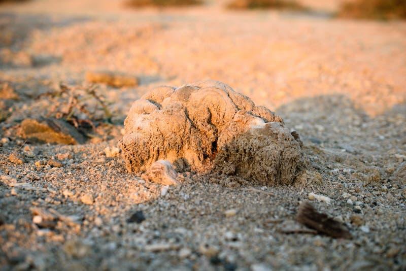 Steen op het zand royalty-vrije stock fotografie