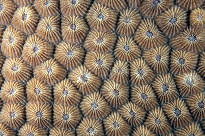Steenachtig koraal stock foto's