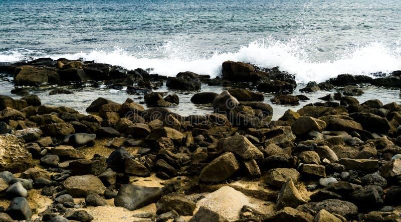 Steenachtig strand met nevel van schommeling royalty-vrije stock fotografie