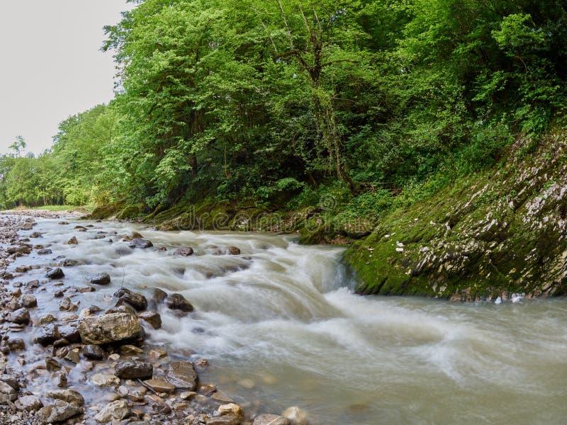 Steenachtige bergstroom met dik groen bos op de kust stock foto's
