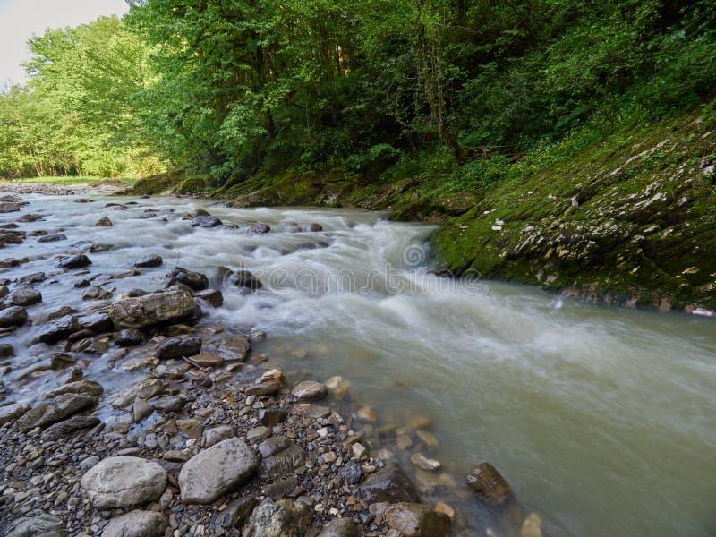 Steenachtige bergstroom met dik groen bos op de kust royalty-vrije stock fotografie