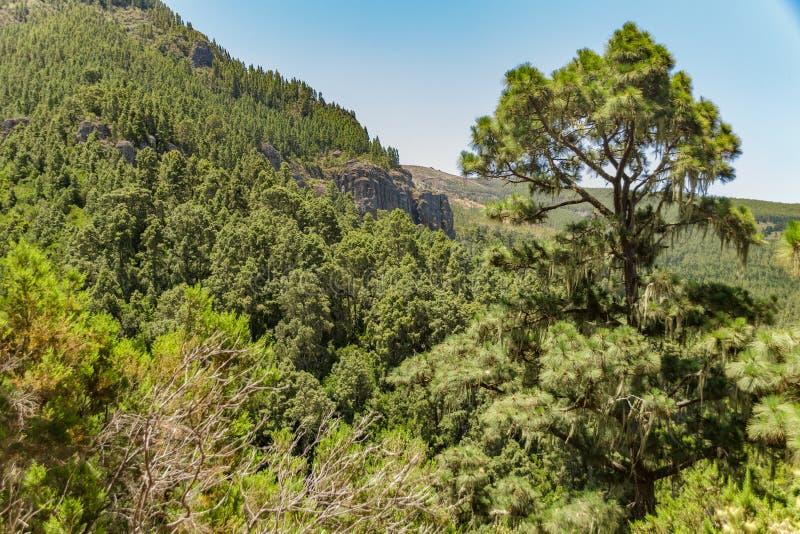 Steenachtige die weg bij hoogland door pijnboombomen bij zonnige dag wordt omringd Duidelijke blauwe hemel en sommige wolken bove royalty-vrije stock foto