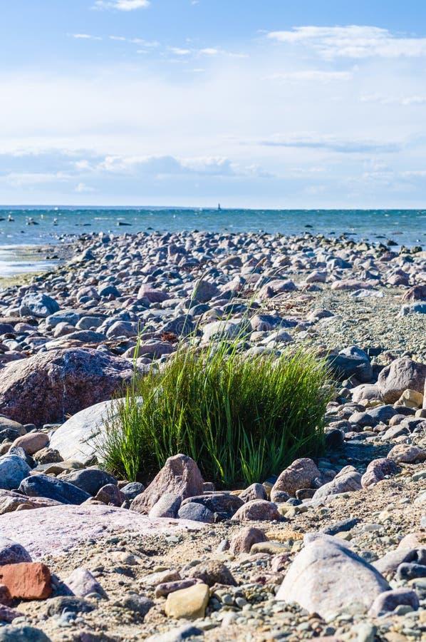 Steenachtige kust van Oostzee royalty-vrije stock foto's