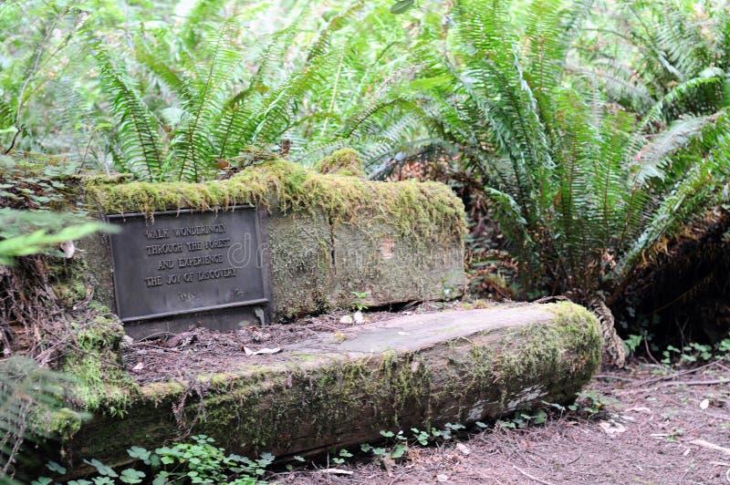 Steenbank in Jedediah Smith Redwoods royalty-vrije stock fotografie