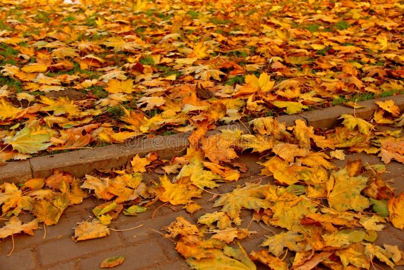 Steenbestrating in gouden de herfstbladeren royalty-vrije stock afbeeldingen