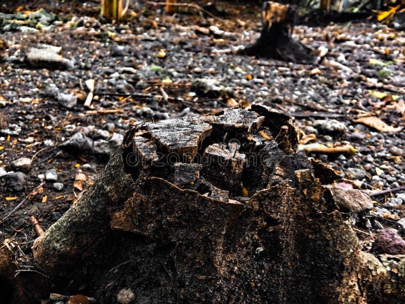 Steenhout stock afbeeldingen