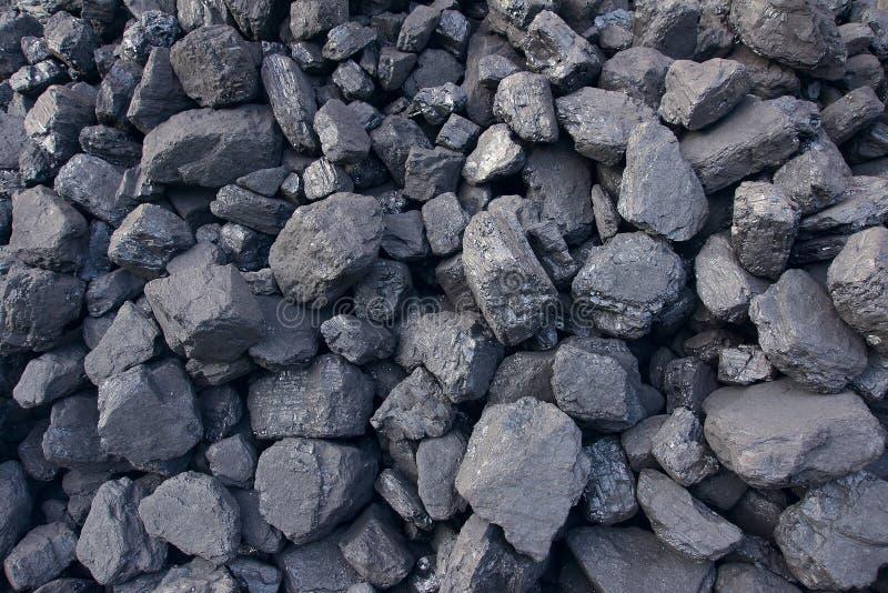 Steenkoolsintel royalty-vrije stock afbeelding