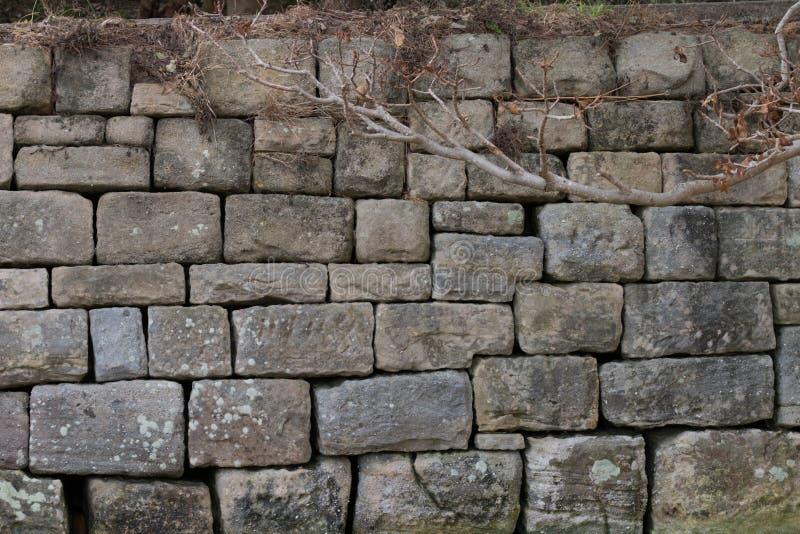 Steenmuur bij Watsons-Baai stock afbeeldingen