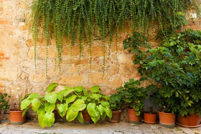 Steenmuur met bloemen en klimop Oude Italiaanse huisachtergrond, uitstekend Italië royalty-vrije stock foto's
