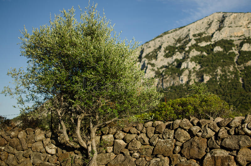 Steenmuur met boom, Sardinige royalty-vrije stock foto's