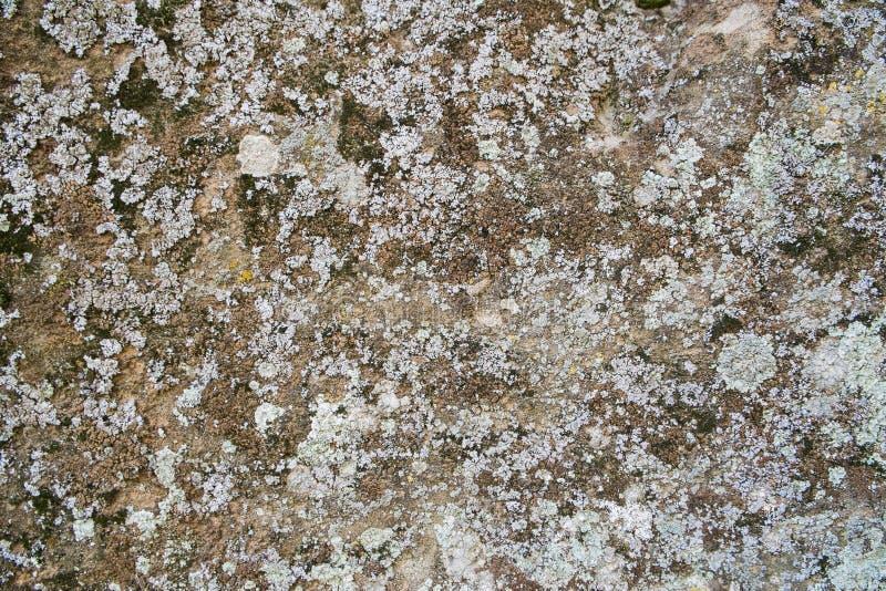 Steenmuur met crustosekorstmos stock fotografie