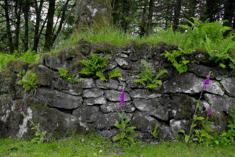 Steenmuur met Digitalissen (het ondubbelzinnig maken) dartmoor royalty-vrije stock foto's