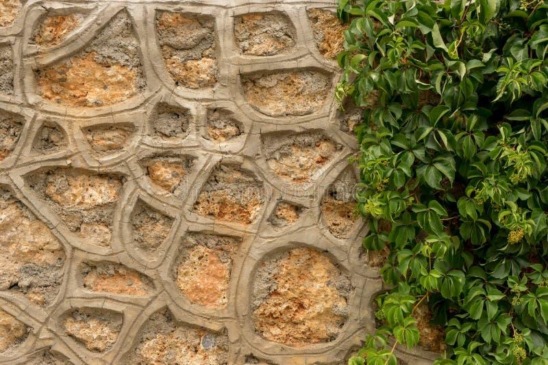 Steenmuur met groene klimop royalty-vrije stock foto's