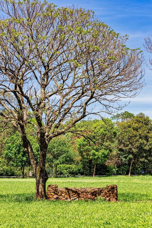Steenmuur onder een boom op het grasrijke gazon op een zonnige dag met blauwe hemel stock foto
