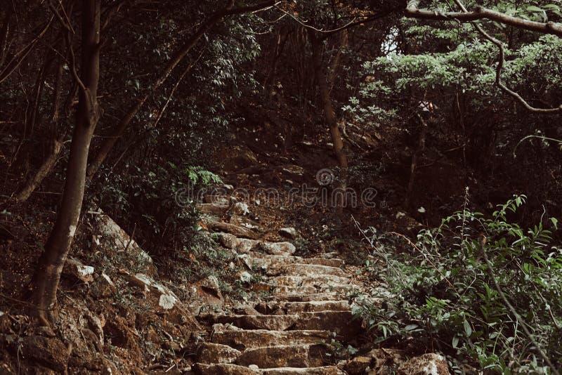 Steentreden tot de heuvel in het donkergroene bos stock afbeelding