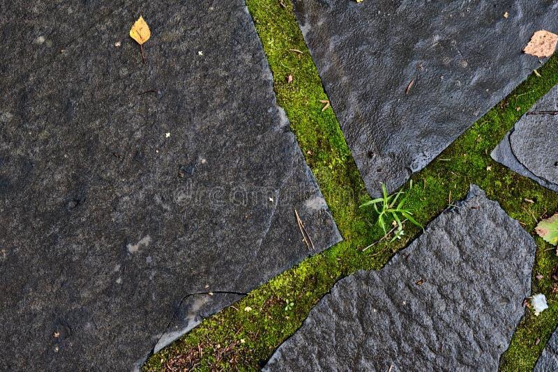 Steenweg in het mos na de regen royalty-vrije stock afbeelding