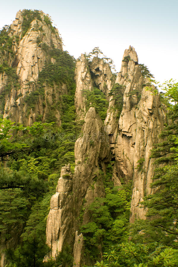 Steep cliffs and pine trees, huangshan, china royalty free stock photo