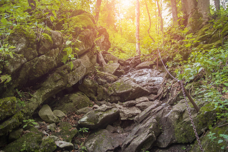 Steep hiking trail in forest royalty free stock photos