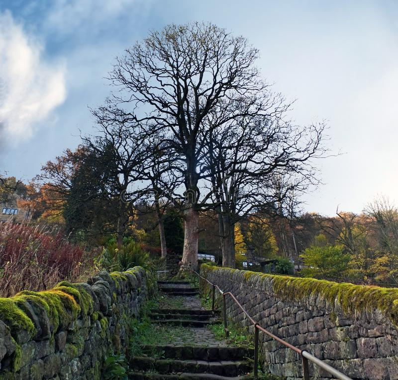 Steep old moss covered stone staircase up a steep hill in a rural woodland setting with a tall bare tree at the top in west royalty free stock photography
