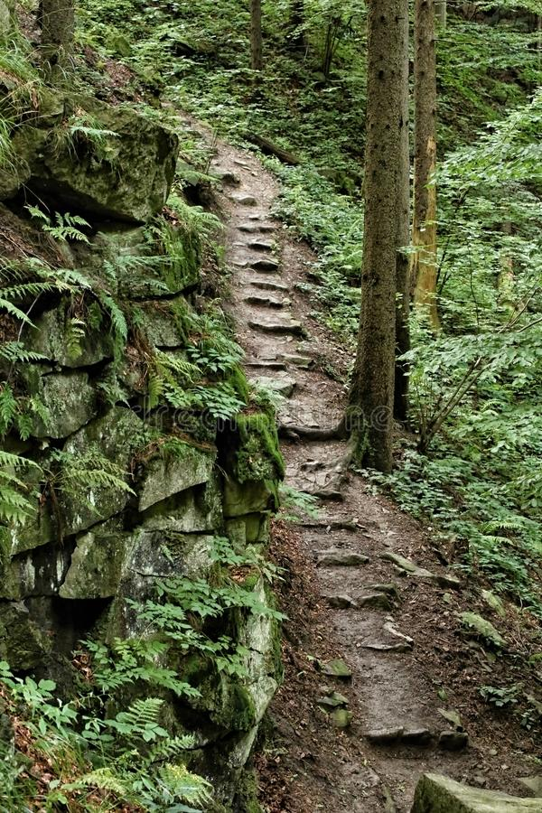 Steep path with stone steps in the woods royalty free stock images